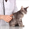 Ветеринарные клиники в Радищево